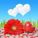 Red heart with gerbera flower on table. Royalty Free Stock Images