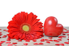 Red heart with gerbera flower on table. Stock Image