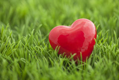 Red heart on the grass Stock Photos