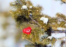 Red heart on the green fir branch. Royalty Free Stock Image
