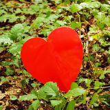 Red heart in green grass Royalty Free Stock Photography
