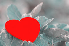 Red heart on green leaf with nature background Royalty Free Stock Image