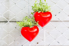 Red heart. With a green plant are hanging on a fence and white plank background Royalty Free Stock Image