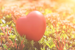 Red Heart on Green spike flower tree for love and Valentine`s Day Stock Photo
