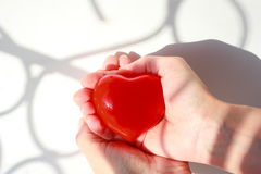 Red heart in hands. Heart on the palms. A big red heart. The light of the sun. Royalty Free Stock Image