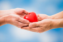 Red heart in human hands Royalty Free Stock Image