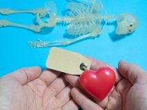 Red heart in human hands and body on background. Red heart with blank tag in human hands and body skeleton on background. donor organ donation concept stock image