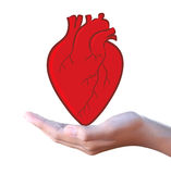Red Heart In Hand Royalty Free Stock Photo