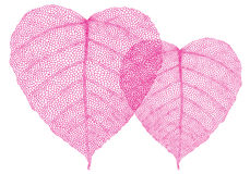 Red heart leaves, vector Stock Image