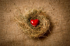 Red heart lying in nest against of linen cloth Stock Photos