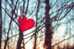 Red heart made of paper hangs on clothespin on tree branch on backdrop of sunset sky