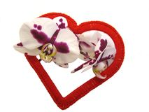 Red heart and Orchid flowers. Red heart made of yarn and Orchid flowers on white background stock photography