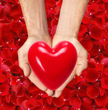 Red heart in man hands over red rose petals Royalty Free Stock Photo