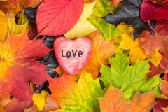 Red heart on Maple Leaves Mixed Fall Colors Background. Red heart on Maple Leaves Mixed Changing Fall Colors Background stock images