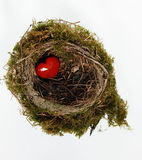 Red heart in nest Stock Image