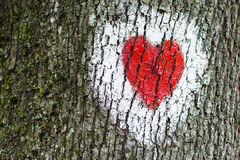 Red Heart Painted on Tree. Red heart inside white circle painted on tree Royalty Free Stock Images