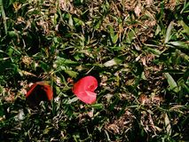 Red heart paper in the grass stock image