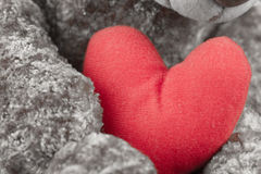 Red heart in the paws of a Teddy bear. Stock Photos