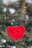 Red heart on pine branch in winter Royalty Free Stock Photo