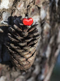 Red Heart on Pine Cone Stock Image