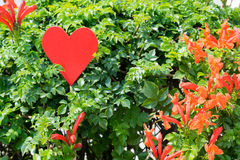 Red heart in plant Royalty Free Stock Image