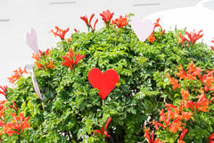 Red heart in plant Royalty Free Stock Photo