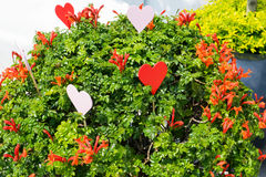 Red heart in plant Stock Photography