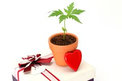 Red heart, plant and gift box Stock Image