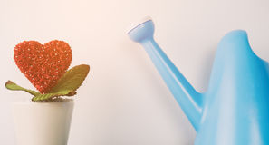 Red heart plant with watering can for romance. Concept stock image