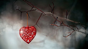 Red heart on prickly branches. Stock Photos
