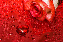 Red heart and rose Stock Photo