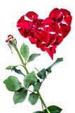 Red heart from the rose leaves in white background Royalty Free Stock Images