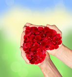 Red heart of rose petals in man hands blurred natural Stock Photo