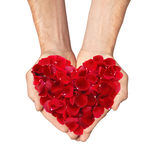 Red heart of rose petals in man hands isolated on white Stock Photo