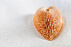 Red heart sea shell in beach white sand. Shallow dof Royalty Free Stock Image