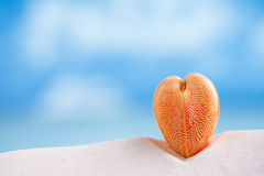 Red heart sea shell with ocean , beach and seascape Royalty Free Stock Image
