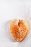 Red heart sea shell on white sand beach Royalty Free Stock Images