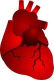 Red heart shape Royalty Free Stock Photos