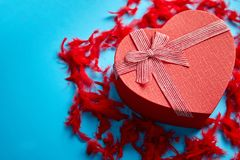 Red, heart shaped gift box placed on blue background among red feathers stock photography