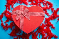 Red, heart shaped gift box placed on blue background among red feathers royalty free stock images