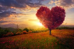 Red heart shaped tree. A red heart shaped tree at sunset Stock Image