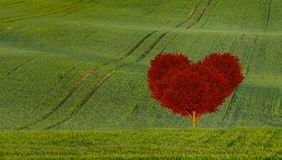 red heart shaped tree on a green field Stock Photo