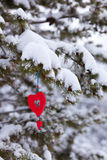 Red heart snowy pine tree christmas ornament. Single red heart shaped Christmas or Valentines decoration hanging from snow covered branches of pine tree in Stock Photo