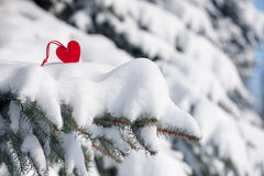 Red heart toy in snow on fir tree Stock Photography