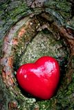 Red heart in a tree hollow. Romantic love Royalty Free Stock Images