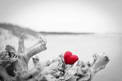 Red heart in a tree trunk on the beach. Love Stock Image
