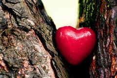 Red heart in a tree trunk. Romantic love Stock Photography