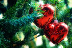 Red heart. In valentine & x27;s day hanging on the green tree .valentineday Stock Photography