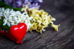 Red heart with white and blue hyacinth flowers background Stock Image