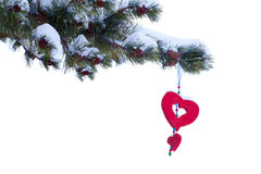 Red heart winter christmas tree ornament isolated. Single red heart shaped Christmas or Valentines decoration hanging from snow covered winter branch of pine Royalty Free Stock Image